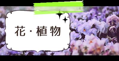花・植物の写真画像