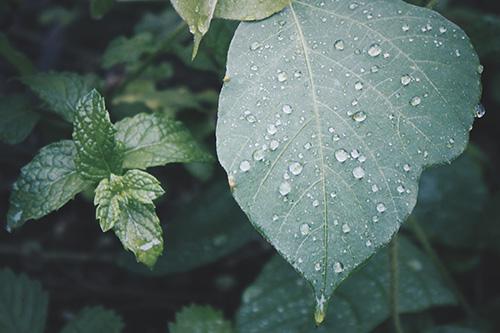 『雨』のフリー写真画像[ID:227]