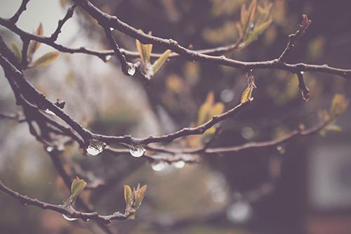 『雨』のフリー写真画像[ID:250]
