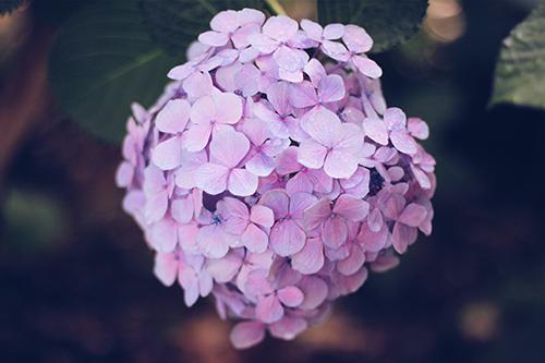 『梅雨』のフリー写真画像[ID:339]