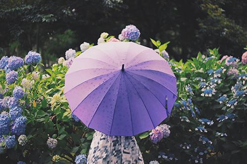 『雨』のフリー写真画像[ID:343]