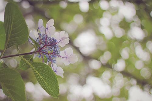『梅雨』のフリー写真画像[ID:348]