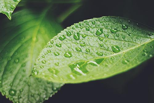 『梅雨』のフリー写真画像[ID:352]