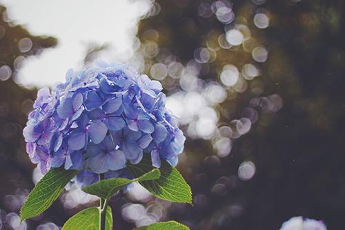 『梅雨』のフリー写真画像[ID:360]