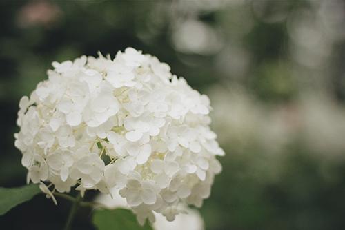 『梅雨』のフリー写真画像[ID:364]