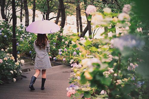 『傘』のフリー写真画像[ID:356]