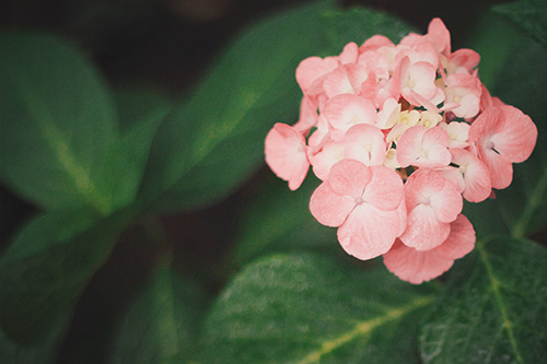 『梅雨』のフリー写真画像[ID:373]