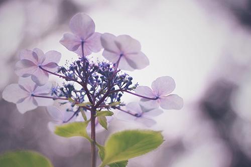 『梅雨』のフリー写真画像[ID:377]