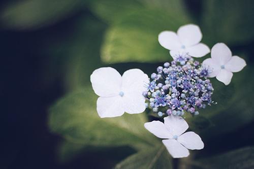 『梅雨』のフリー写真画像[ID:385]
