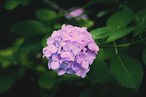 『梅雨』のフリー写真画像[ID:397]