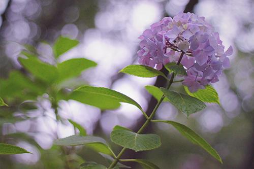 『梅雨』のフリー写真画像[ID:401]