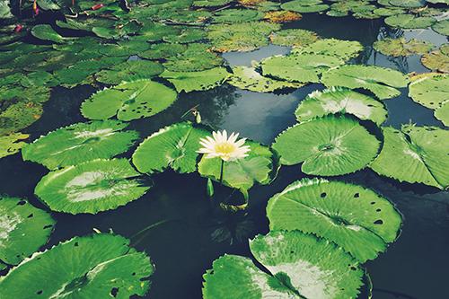 『花・植物』のフリー写真画像[ID:700]