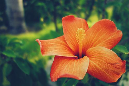 『花・植物』のフリー写真画像[ID:765]