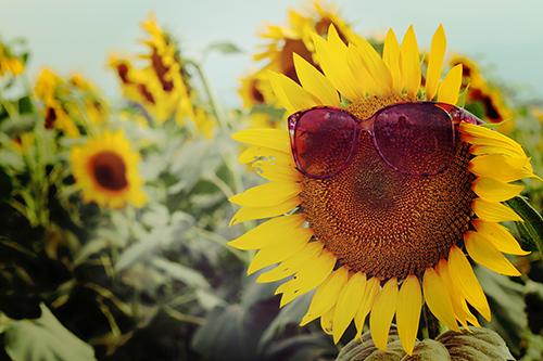 『花・植物』のフリー写真画像[ID:979]