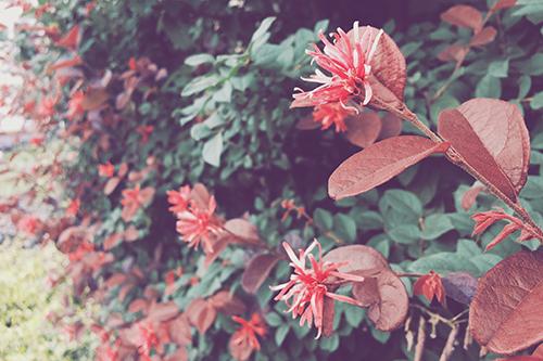 『植物』のフリー写真画像[ID:1703]