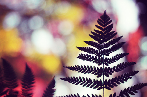 『植物』のフリー写真画像[ID:1698]