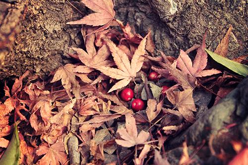 『落ち葉』のフリー写真画像[ID:1723]