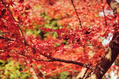 『花・植物』のフリー写真画像[ID:1682]