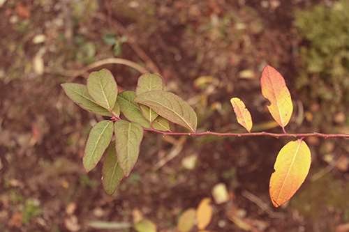 『植物』のフリー写真画像[ID:1690]