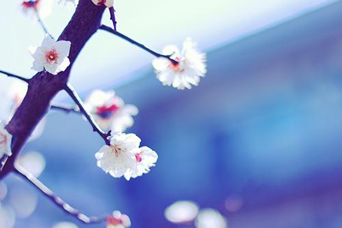 『花・植物』のフリー写真画像[ID:2472]