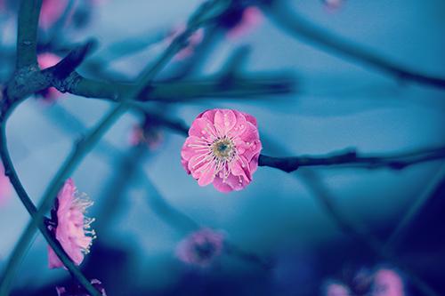 『花・植物』のフリー写真画像[ID:2468]