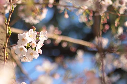『花・植物』のフリー写真画像[ID:2513]