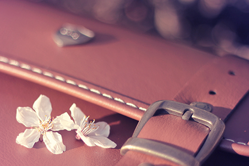 『花・植物』のフリー写真画像[ID:2517]