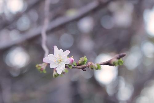 『花・植物』のフリー写真画像[ID:2521]
