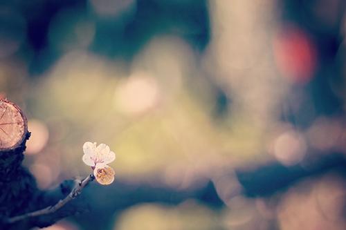 『植物』のフリー写真画像[ID:2542]