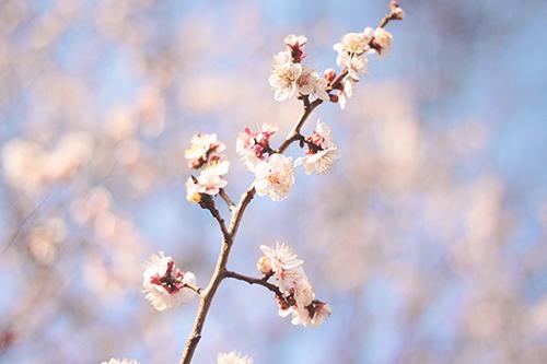 『植物』のフリー写真画像[ID:2525]