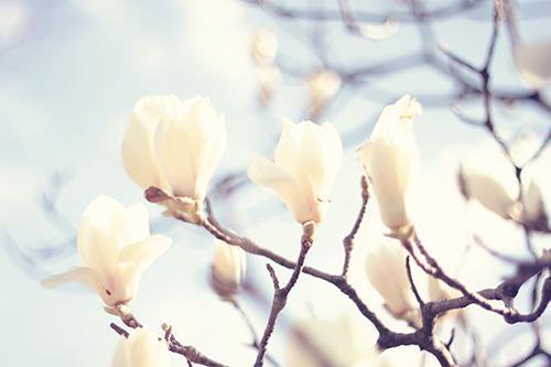 『植物』のフリー写真画像[ID:2529]