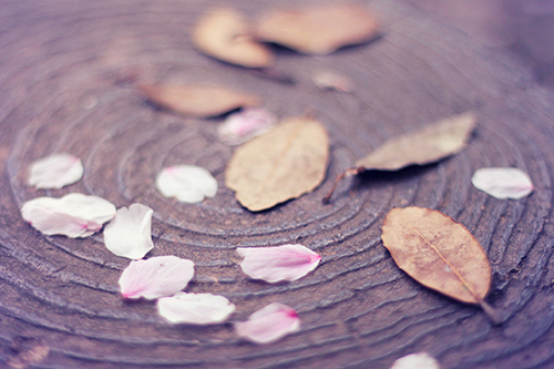 『花・植物』のフリー写真画像[ID:2534]