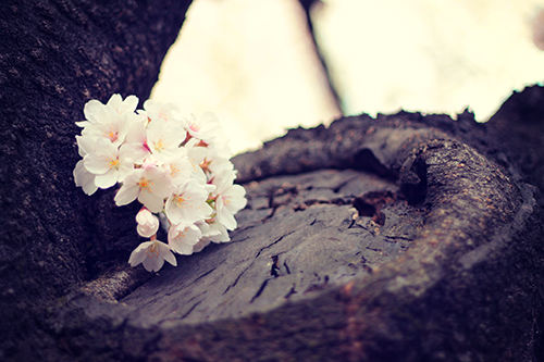 『花・植物』のフリー写真画像[ID:2538]