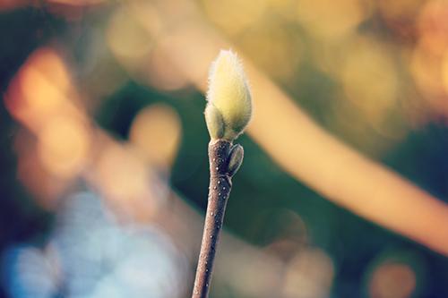 『春』のフリー写真画像[ID:2724]