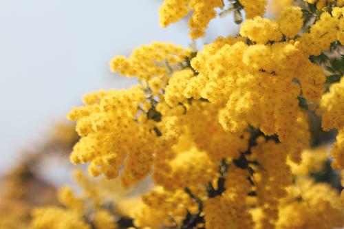 『春』のフリー写真画像[ID:2727]
