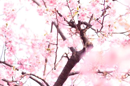 『春』のフリー写真画像[ID:2715]