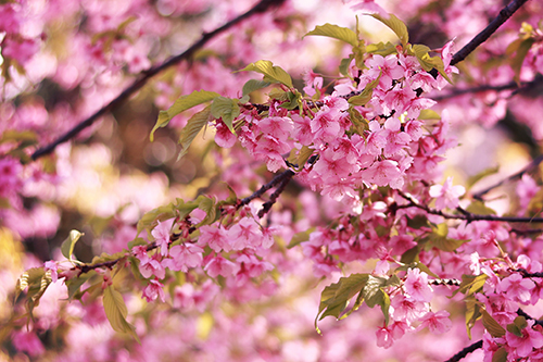 『春』のフリー写真画像[ID:2692]