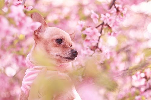 『動物』のフリー写真画像[ID:2639]