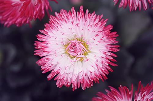 『春』のフリー写真画像[ID:2751]