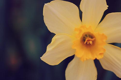 『春』のフリー写真画像[ID:2747]