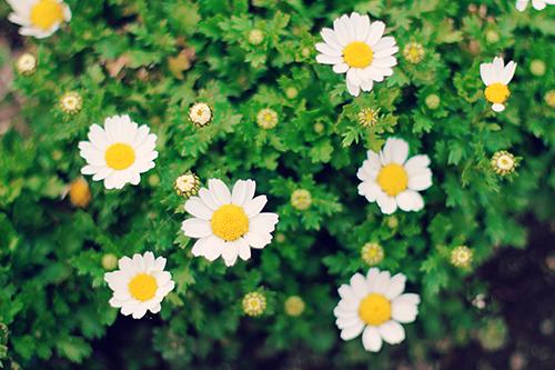 『春』のフリー写真画像[ID:2960]