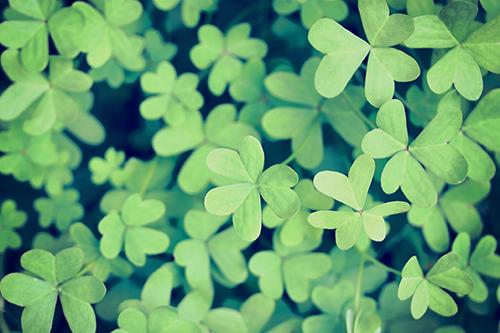 『花・植物』のフリー写真画像[ID:2942]