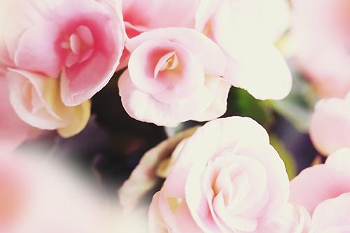 『春』のフリー写真画像[ID:2950]