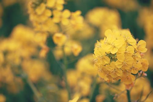 『春』のフリー写真画像[ID:2946]