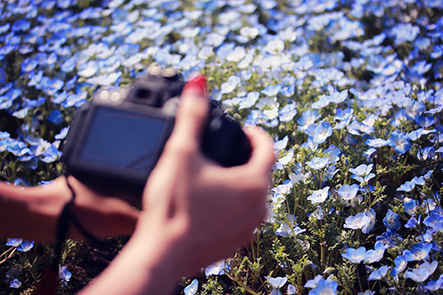 『花畑』のフリー写真画像[ID:3025]