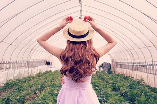 『春』のフリー写真画像[ID:3033]