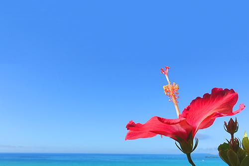 『花』のフリー写真画像[ID:3565]