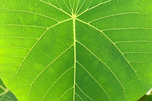 『花・植物』のフリー写真画像[ID:3543]