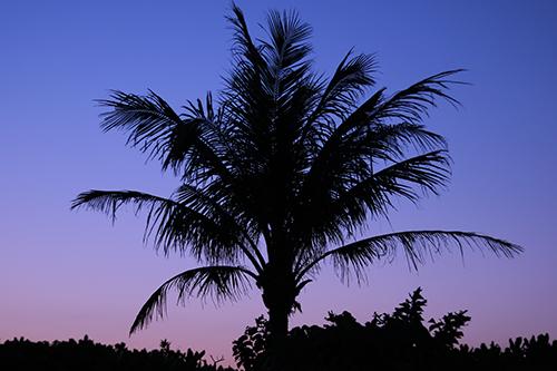 『夏の夕暮れ』のフリー写真画像[ID:3591]