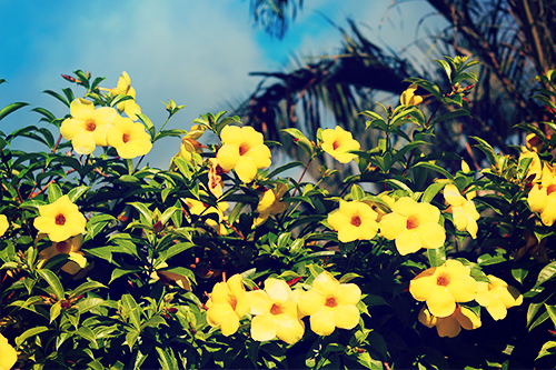 『花・植物』のフリー写真画像[ID:3731]